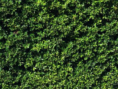 background-of-the-leaves-wall-AL7CNA3